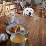 大型犬と暮らすなら知っておきたい!ドッグカフェマナーについて