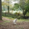 夏でも涼しく愛犬とアウトドア体験!「清里丘の公園」オートキャンプ場<山梨県>