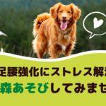 愛犬と森あそびしてみませんか?足腰強化やストレス解消に効果的!【動物看護師オススメ】