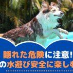 隠れた危険に注意!夏は愛犬と水遊びを安全に楽しもう!【動物看護師が解説】