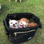 犬との外遊びに活躍しそう!初めて購入したリュックキャリーの使用感をレポート