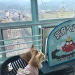 湯の町別府で愛犬と一緒に立ち寄れるおすすめ穴場スポット<大分県別府市>