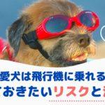 愛犬も一緒に飛行機に乗れる?知っておきたいリスクと注意点・着陸後のケアは?【動物看護師が解説】
