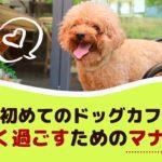 愛犬と初めてのドッグカフェ!楽しく過ごすためのマナーは?【動物看護師が解説】