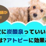 トリミングサロンの犬の炭酸泉ってなに?利用頻度や効果について【動物看護師が解説】