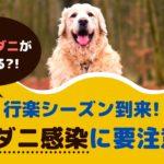 秋の行楽シーズン到来!愛犬のマダニ感染に要注意!【動物看護師が解説】