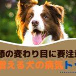 季節の変わり目に要注意!秋に増える犬の病気トップ5【動物看護師が解説】