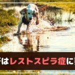 愛犬とのレジャー!川遊びやアウトドアで感染する病気があるってホント?【動物看護師が解説】