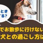 台風や大雨でお散歩に行けないとき愛犬との過ごし方は?【動物看護師が解説】