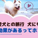愛犬との家族旅行!わんちゃんにとって良い効果があるってホント?【動物看護師が解説】