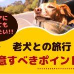 老犬との旅行!注意すべきポイントは?【動物看護師が解説】