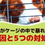 犬がケージの中で暴れる!原因と5つの対処法【動物看護師が解説】