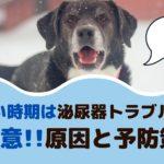 寒い時期は愛犬の泌尿器トラブルに要注意!原因と予防策は?【動物看護師が解説】