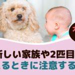 犬も嫉妬する?!新しい家族や2匹目を迎えるときに注意すること【動物看護師が解説】