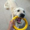 もっと楽しく!愛犬とのおもちゃ遊びを楽しもう!