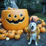 ハロウィンは「萌木の村」で♪愛犬と仮装を楽しもう!<山梨県北杜市>