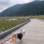 愛犬と一緒に秋の紅葉狩りに行こう!九州の紅葉スポット10選