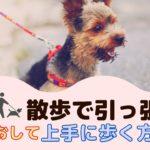 愛犬の引っ張り癖をなおして上手にお散歩する方法は?【動物看護師が解説】