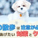 冬の散歩は注意が必要!愛犬にやってあげたい対策とケアは?【動物看護師が解説】