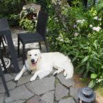マナーと想像力を磨いて、愛犬の食卓でのハプニングを防止しよう!