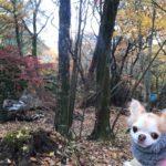 愛犬と冬キャンプを楽しもう!持っていくべきオススメ防寒グッズ紹介