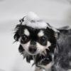 愛犬の乾燥肌には保湿シャンプーやローションを!おすすめ冬のケア用品をご紹介