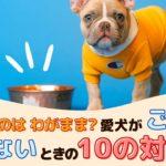 食べないのはわがまま?愛犬がドッグフード(ご飯)を食べないときの10の対処法【動物看護師が解説】