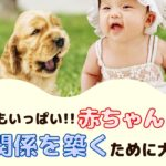 実は危険もいっぱい!赤ちゃんと犬が良い関係を築くために大切な事【動物看護師が解説】