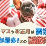 クリスマスやお正月は要注意!12月が最多!犬の誤飲事故【動物看護師が解説】