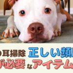 愛犬の耳掃除の正しい頻度は?注意が必要な洗浄アイテムって何?【動物看護師が解説】