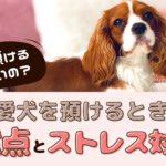 どこに預けるのがいいの?愛犬をペットホテルに預けるときの注意点とストレス対策【動物看護師が解説】