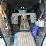 愛犬とのドライブをもっと安全・快適に!用意しておきたいグッズのご紹介