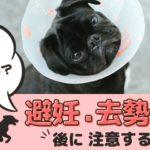 犬の避妊・去勢手術後に注意すること!術後の食事やお散歩、愛犬の変化について【動物看護師が解説】