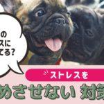 愛犬のストレスに気づけてる?犬にストレスを溜めさせない方法は?【動物看護師が解説】