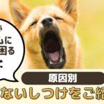 愛犬がチャイムに吠えて困る!犬が吠えなくなるしつけをご紹介【動物看護師が解説】