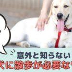 犬の運動=散歩ではない?!意外と知らない犬に散歩が必要なワケ【動物看護師が解説】