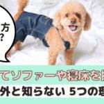 犬がソファーや寝床を掘る理由は?止めさせた方がいいの?【動物看護師が解説】