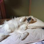 愛犬と一緒に寝るのはNG?よくないと言われる理由と注意すべきポイントについて