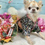 愛犬と一緒にお参りしよう!初詣や七五三に行きたい全国の犬にまつわる神社