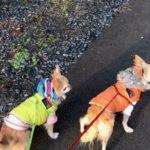 着せっぱなしは要注意!冬こそ気をつけたい愛犬の洋服によるトラブルとは?
