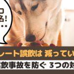 犬のチョコレート中毒は2月が最多!誤飲事故を防ぐためには?【動物看護師が解説】