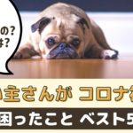 わんちゃんと一緒に暮らしている飼い主さんがコロナ禍で困ったことベスト5【動物看護師が解説】