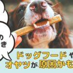 犬の耳垢の原因ってなに?ドッグフードやオヤツが影響してるってホント?【動物看護師が解説】
