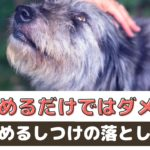 【初心者必見!】愛犬を褒めるだけではダメ?!褒めるしつけの落とし穴【動物看護師が解説】