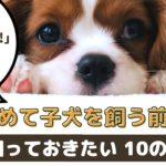 初めて子犬を飼う前に知っておきたい10の大切なこと【動物看護師が解説】
