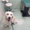 おなかが弱い愛犬を何とかしたい!手作り食で体質改善体験記