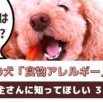 愛犬が食物アレルギーかも?と思ったら!飼い主さんにできること【動物看護師が解説】