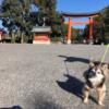 愛犬と一緒に宇佐神宮とその周辺を散策!人気ドッグカフェ情報もお届け<大分県>