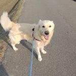 時には愛犬の気の向くままに♪お散歩コースを選んでもらおう!