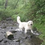 愛犬と自然の森で遊ぼう!楽しむポイントや注意事項について